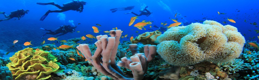 Underwater image provided by Bigstock